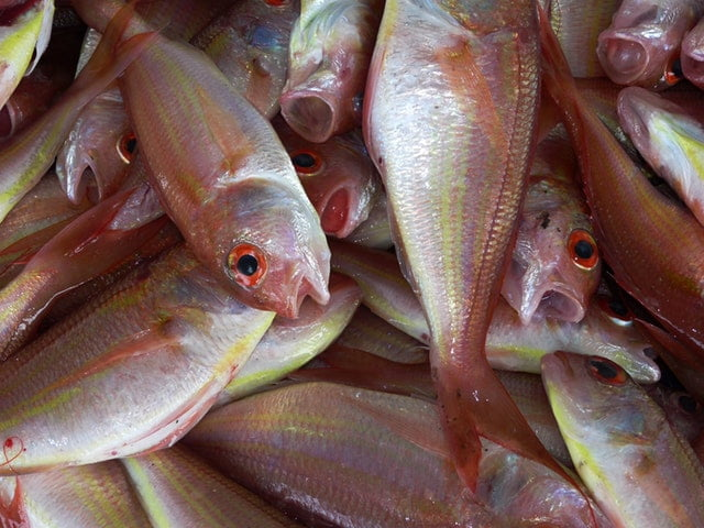 group-of-pink-and-white-fish-61153